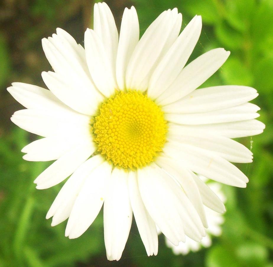 Daisy May Days